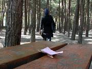 زیر درختان کاج